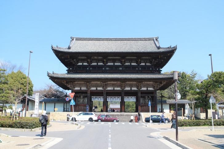 晴天の京都で桜は咲いているでしょうか?