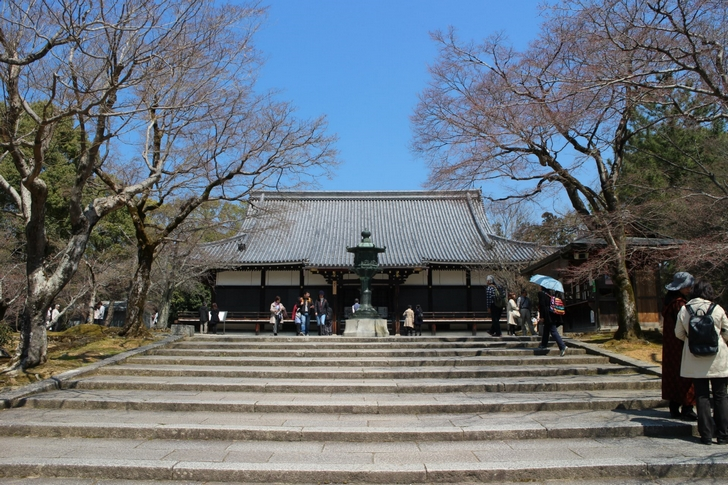 仁和寺手前の桜が「関山」です