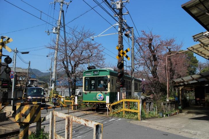 嵐電「夜桜ライトアップ」は2017年4月7日から3日間
