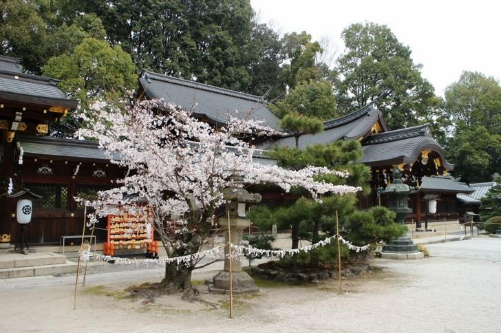 今宮神社にも桜が少しありました