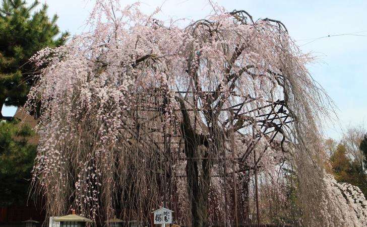 【追加写真】2017年4月5日の開花状況