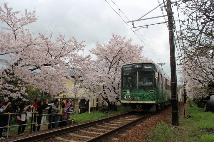 4月9日 嵐電「桜のトンネル」