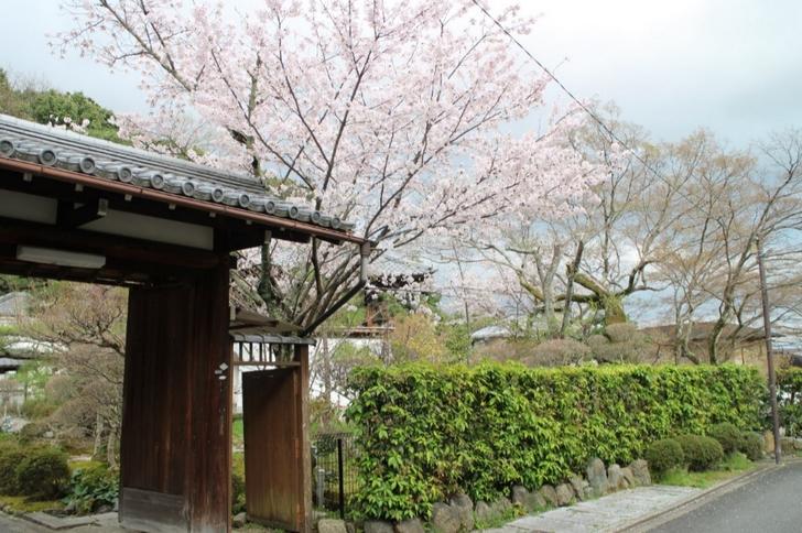 轉法輪寺の桜