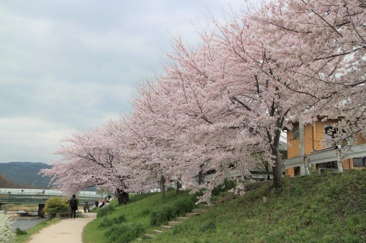桜の名所もいいけど、気楽に見るのもいいものです