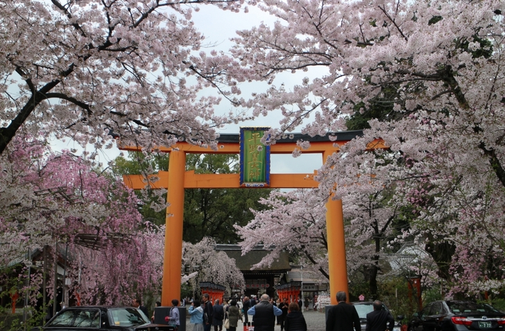 京都・平野神社「桃桜」2017年4月12日撮影
