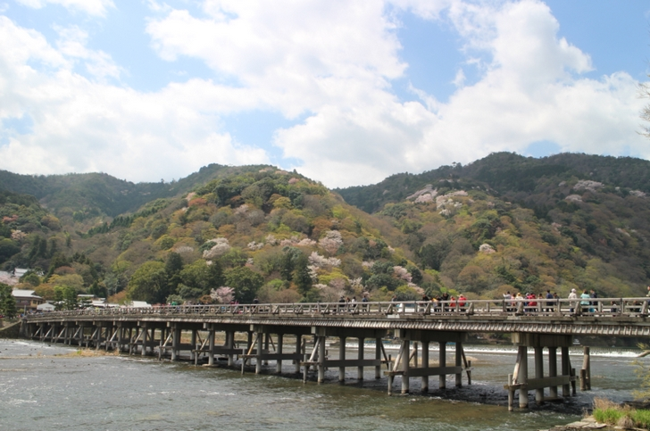 渡月橋から見える「まだら桜」