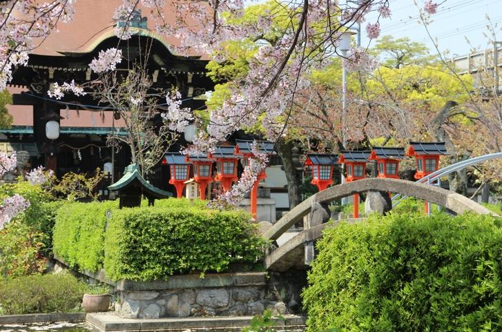 京都駅に近い桜の穴場