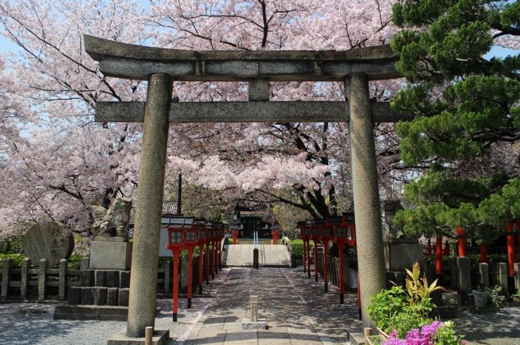 駅に近い桜の穴場「六孫王神社」への行き方