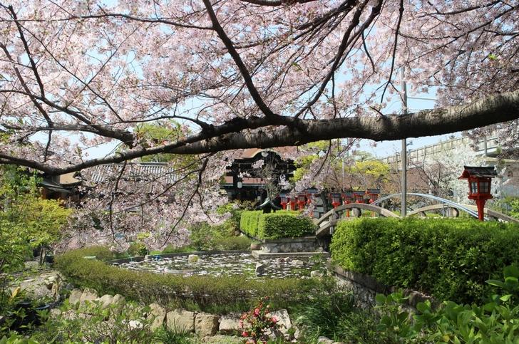 境内中央の「神龍池」から桜を望む