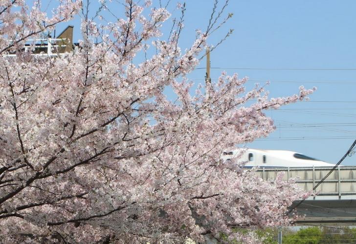 新幹線と桜のツーショット