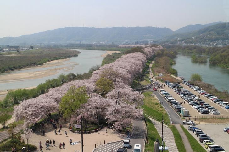 展望台から見た絶景の桜