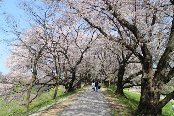 桜の並木は人が結構多かったです