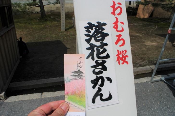 仁和寺は門前に開花状況が毎日公表されています