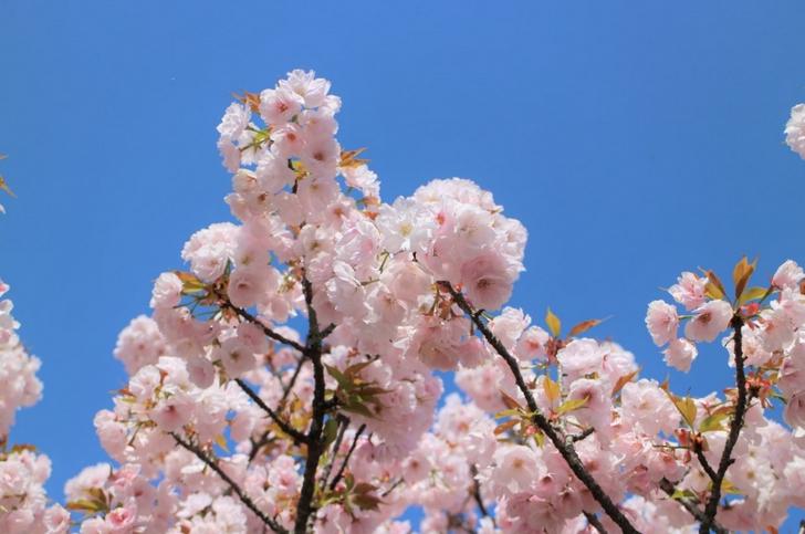 御室桜のある仁和寺とは