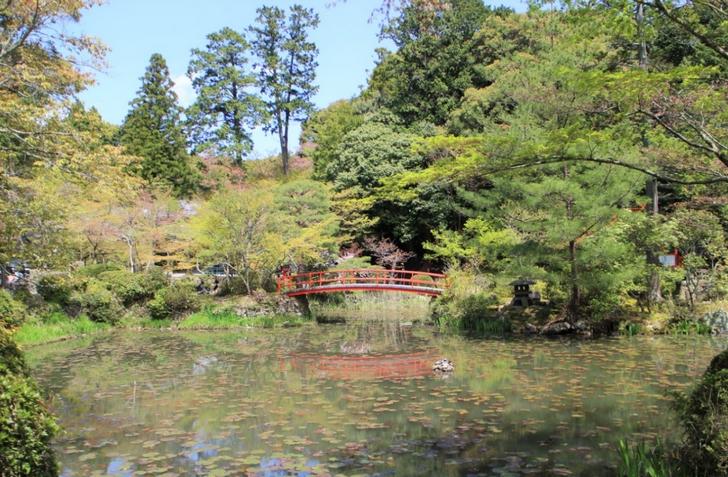 境内の池を眺めながらお弁当を食べることができます