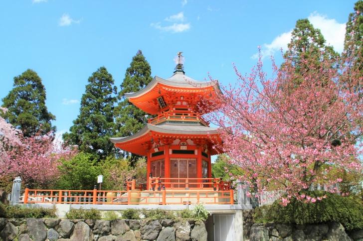 朱色の仏塔とピンクの桜が絶妙なこの場所はどこ?