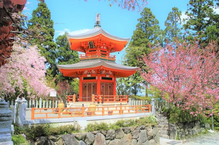 こちら以外にも庭園があって枝垂桜が5月まで見られます