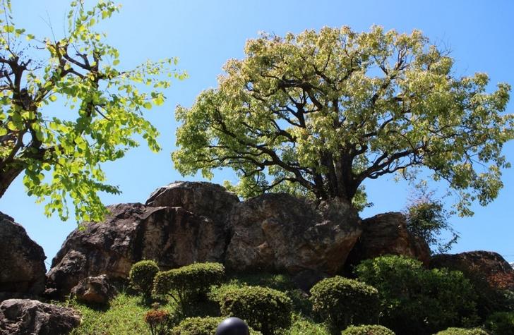 京都最大の横穴石室古墳「蛇塚古墳」