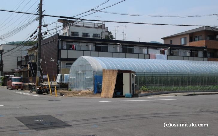 大宮西総門口町の野菜有人販売
