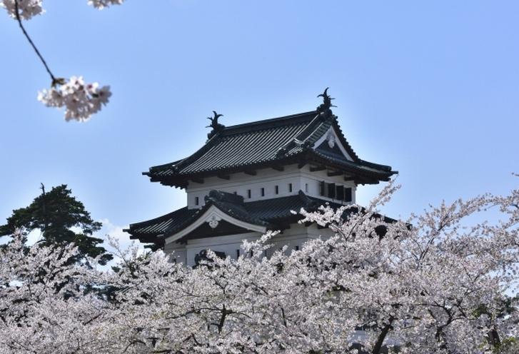 日本一の桜の名所「弘前城」は石垣修復中です