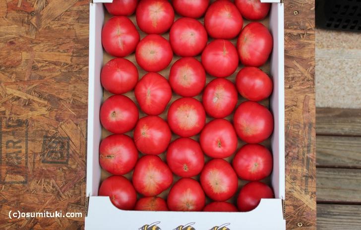 ハチのとまとは自然受粉で栽培されたトマトのこと