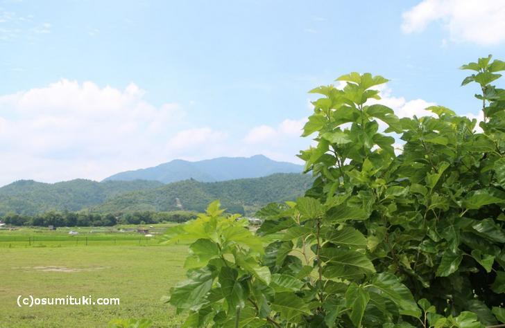 「北嵯峨エリア」の初夏の風景
