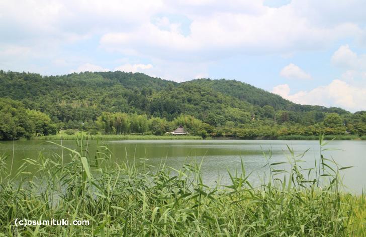広沢池は周囲1.3kmにもなる大きな池