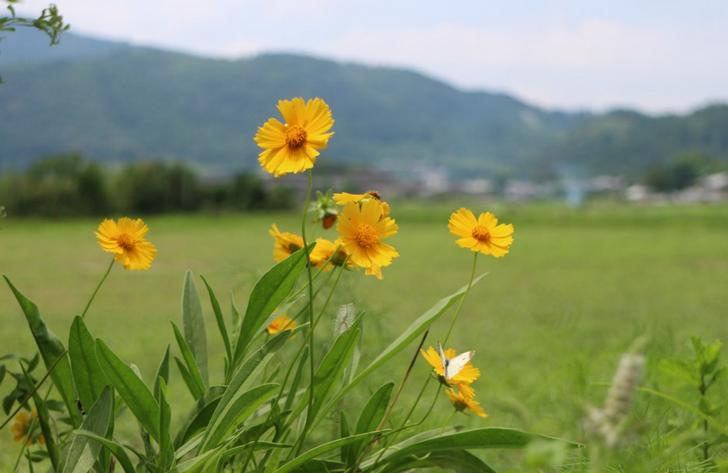 北嵯峨の初夏の風景