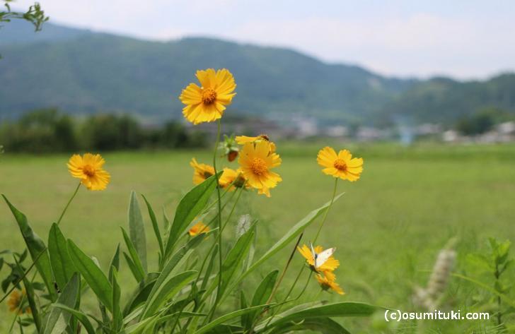 初夏の時期には田園の緑と花がキレイな場所です