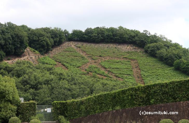 「妙」なんかは宝ヶ池の公園からよく見えますが、左大文字は場所を選ばないといけません