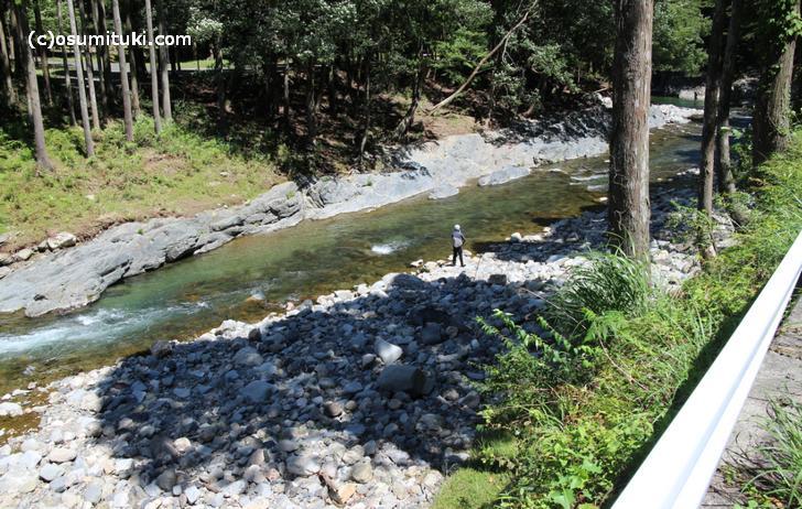 京都市左京区・針畑川でアユ釣り等をする釣り人