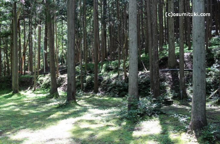久多川のキャンプ場は「大黒谷キャンプ場」だけです