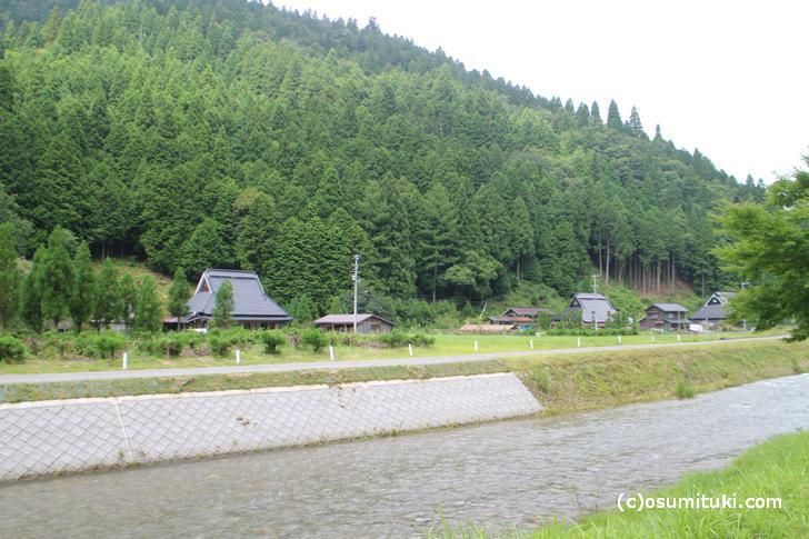 自然豊かな京都・広河原で「イタドリの山椒煮」が復活