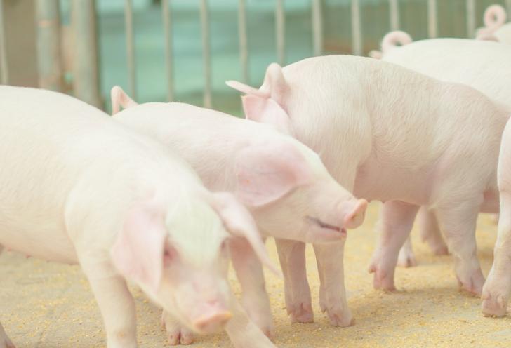 ハラル料理は豚肉由来のもの使っていないだけです