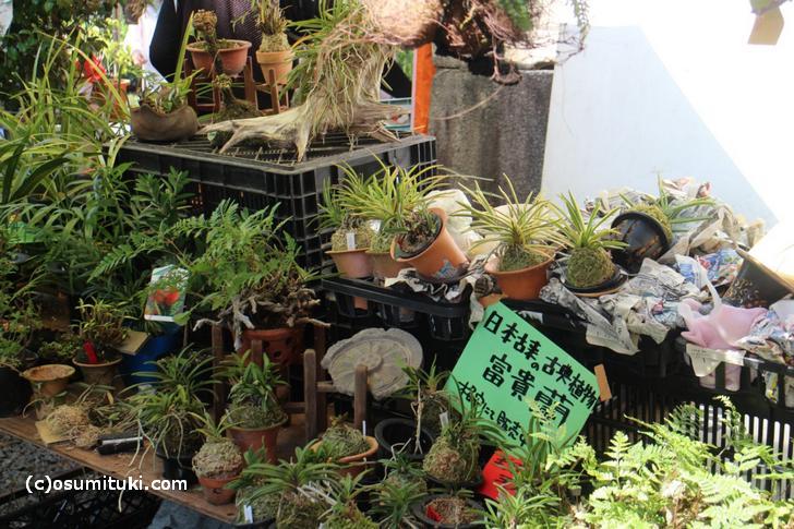 一番西の通りは植物などが売られています