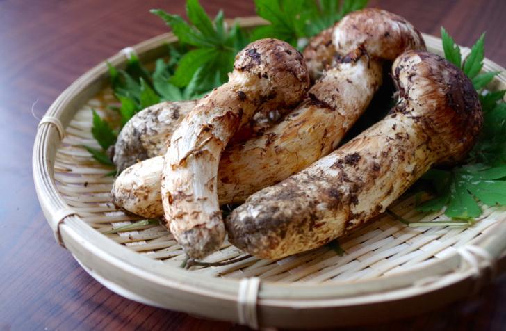 秋の味覚「まつたけ」、京都の松茸といえば「丹波マツタケ
