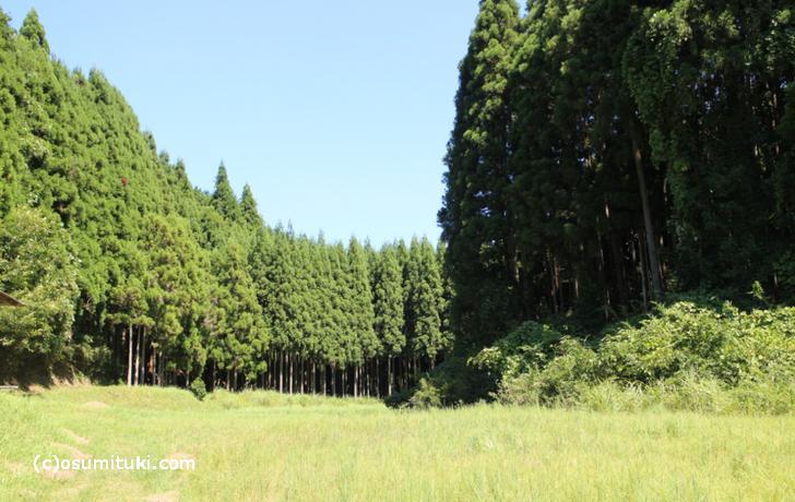 京都の山林は入札制