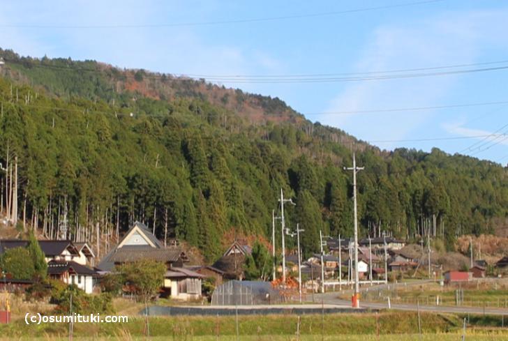 家の近所でも山を見れば「杉」というのが京都です