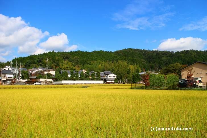 京都産業大学近くの田園風景、この奥に「ロバのパン屋本部」があるらしい