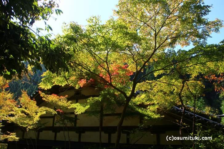 吟松寺の前にある細い道から見る紅葉が絶景なのです