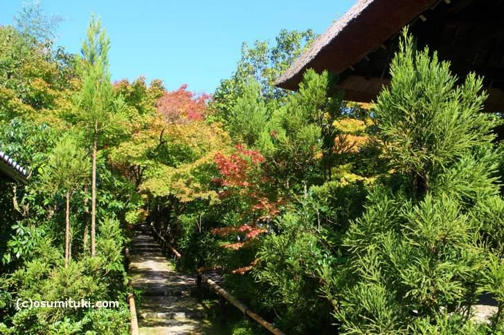 光悦寺の紅葉はほんのり色づいていました