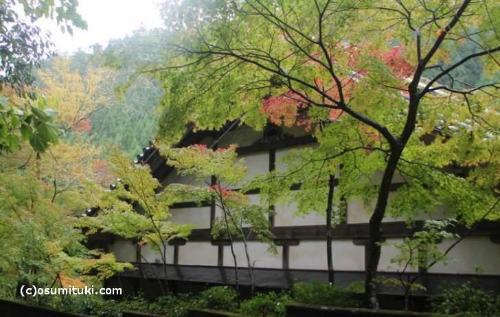 京都・鷹峯「吟松寺」は昨日より紅葉が進んでいました