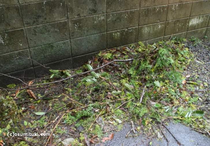 これは「台風21号」で飛散した枝葉です