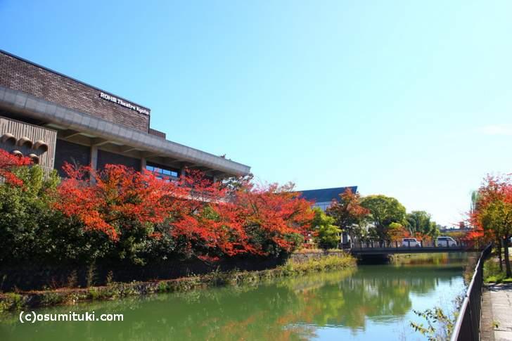 ロームシアター京都の紅葉(2017年11月1日撮影)