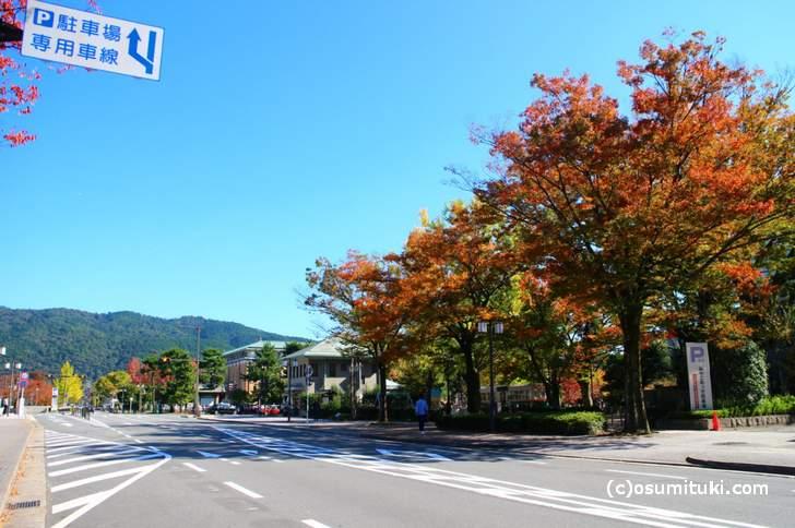 紅葉の街路樹が並ぶ二条通を通って平安神宮を目指します