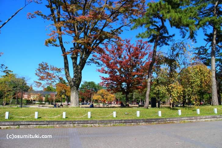 岡崎公園の紅葉、朱色になってますねぇ