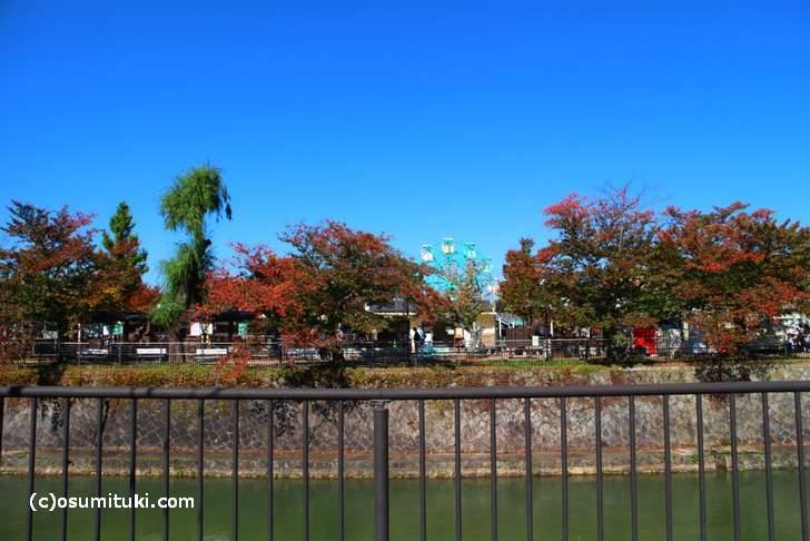 京都市動物園の紅葉(2017年11月1日撮影)
