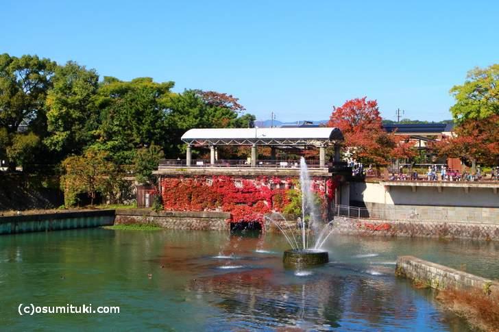 京都市動物園の前にある噴水のところに紅葉のオブジェがありました