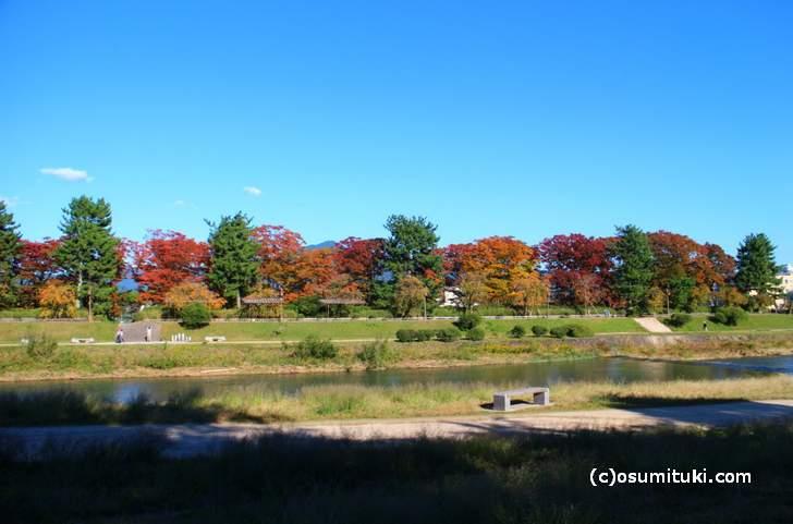 北大路駅より北の鴨川は紅葉の並木道になります(2017年10月31日撮影)