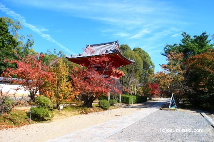 2017年11月2日、京都・仁和寺は少し枯れた感じの紅葉でした
